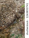 rocks along the seashore on the ... | Shutterstock . vector #1263853741
