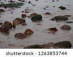 rocks along the seashore on the ... | Shutterstock . vector #1263853744