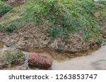 rocks along the seashore on the ... | Shutterstock . vector #1263853747