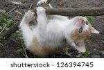 Stock photo kitten 126394745
