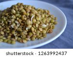 fresh  tasty lentil sprouts.... | Shutterstock . vector #1263992437