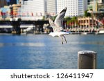 flying seagull in darling... | Shutterstock . vector #126411947