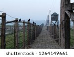 The Barbed Wire Fence...