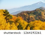 yellow and green trees in... | Shutterstock . vector #1264192261