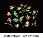 set of tea roses watercolor on... | Shutterstock . vector #1264246087