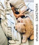 puppy dog sleeping on sofa... | Shutterstock . vector #1264276354