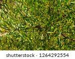 soft  beautiful  fluffy ...   Shutterstock . vector #1264292554