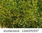 soft  beautiful  fluffy ...   Shutterstock . vector #1264292557