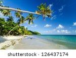 palm tree extending over a... | Shutterstock . vector #126437174