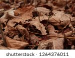 dry autumn leaves on the ground.... | Shutterstock . vector #1264376011
