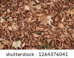 dry autumn leaves on the ground.... | Shutterstock . vector #1264376041