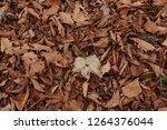 dry autumn leaves on the ground.... | Shutterstock . vector #1264376044