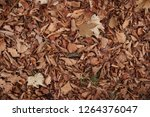 dry autumn leaves on the ground.... | Shutterstock . vector #1264376047