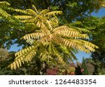 autumn colours of a chinese... | Shutterstock . vector #1264483354