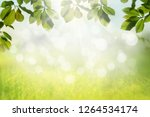spring nature background with... | Shutterstock . vector #1264534174