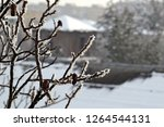 branches of trees covered with... | Shutterstock . vector #1264544131