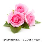 Stock photo three beautiful pink roses on a white background 1264547404