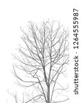the branches of the tree have... | Shutterstock . vector #1264555987