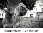Funny Small Grey Donkey In His...