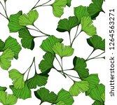 green ginkgo leaf. plant... | Shutterstock . vector #1264563271