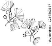 isolated ginkgo illustration... | Shutterstock . vector #1264563997