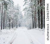 walkway through the snow...   Shutterstock . vector #1264619944