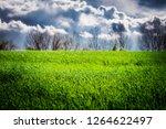 Green grass field after thunderstorm sun light & clouds on sky. Spring wheather thunderstorm sun rain on farm field background. Storm clouds green grass meadow rising thunderstorm. Rural grass storm