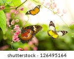 Butterfly Flying In The Summer...