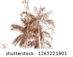 the leaves of the palm tree are ... | Shutterstock . vector #1265221801
