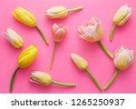 tulip pattern on a pink... | Shutterstock . vector #1265250937