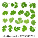 top view of fresh green parsley ... | Shutterstock . vector #1265306731