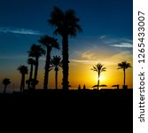 beautiful silhouettes of palm... | Shutterstock . vector #1265433007
