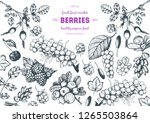 berry hand drawn vector... | Shutterstock .eps vector #1265503864