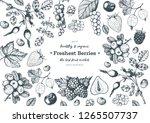 berry  hand drawn  vector... | Shutterstock .eps vector #1265507737