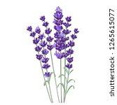 lavender flower. romantic... | Shutterstock .eps vector #1265615077