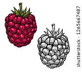 raspberry illustration in... | Shutterstock .eps vector #1265667487