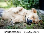 Stock photo cute dog is outside in the garden 126573071