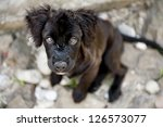 Stock photo cute dog is playing outside 126573077