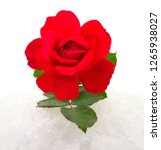 red rose on snow isolated on... | Shutterstock . vector #1265938027