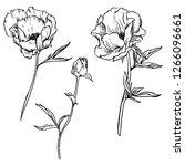 vector set of drawing flowers... | Shutterstock .eps vector #1266096661