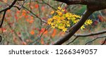 yellow autumn leaves scenery of ... | Shutterstock . vector #1266349057