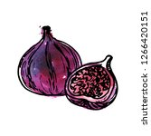 vector ink drawing fig with... | Shutterstock .eps vector #1266420151