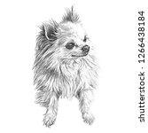 Illustration Of Handsome Dog...