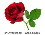 Stock photo red rose 126653381