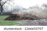 Steaming Manure Heap