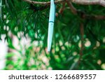 a white pen hanged on a tree... | Shutterstock . vector #1266689557