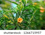 an orange flowee | Shutterstock . vector #1266715957