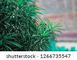 vivid green plant leaves | Shutterstock . vector #1266735547