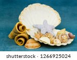 Starfish In An Open Shell On A...