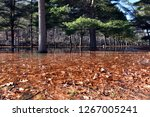 sub freezing lake with colorful ... | Shutterstock . vector #1267005241